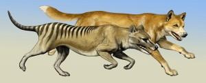 buidelwolf1