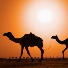 Camel caravan --- Image by © Frank Krahmer/Corbis