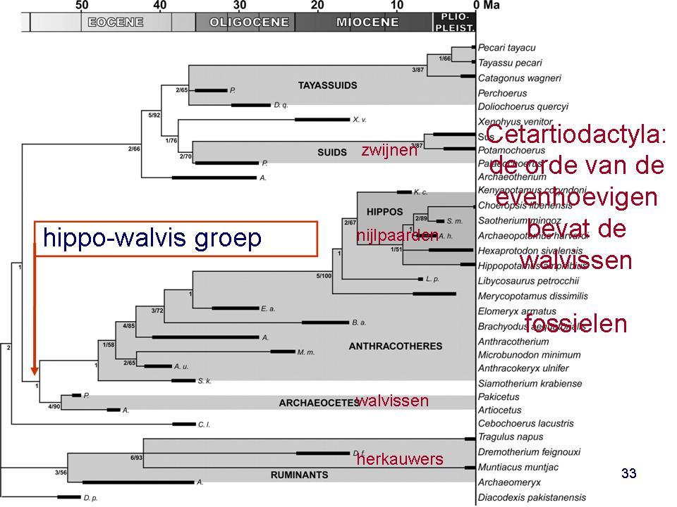 figuur-21-macro-2-boisserie-walvissen-tussen-fossielen