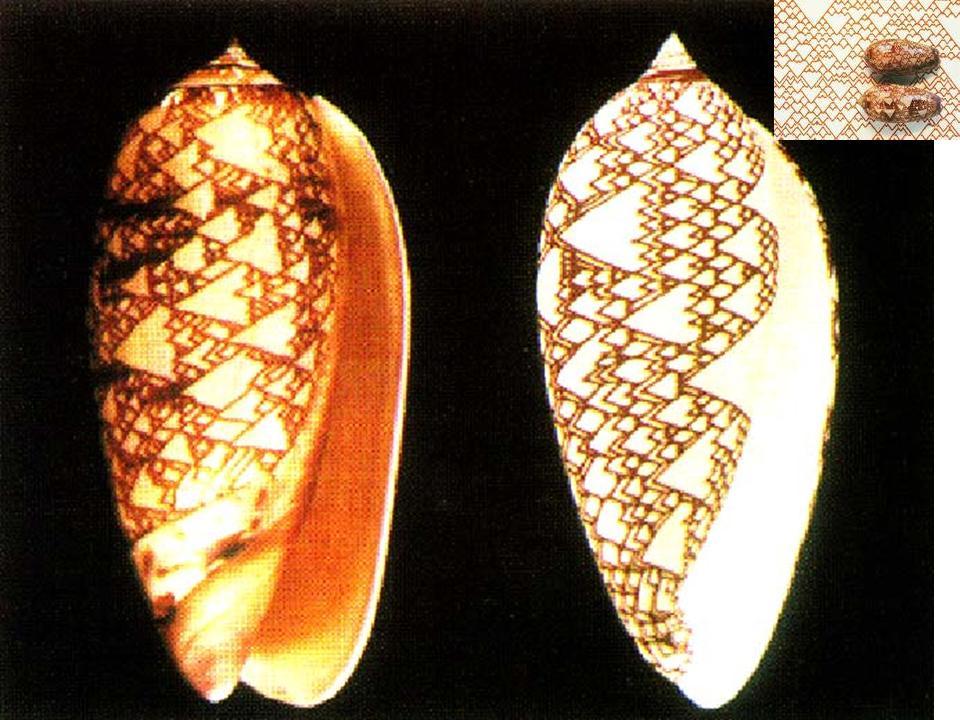 figuur-5-macro-3-schelp-en-simulatie