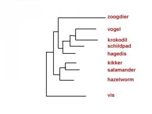 figuur-8b-macro-2-schema-tetrapoda1