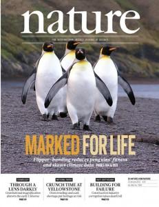 nature-pinguin