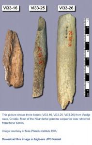 neandertaler-botten