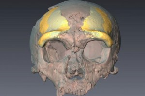 schedel_neanderthaler_15-061